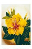 Hawaiian Yellow Hibiscus, c.1940s Posters by Ted Mundorff