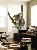 Australia, Queensland, Lone Pine Koala Sanctuary, Koala Malowidło ścienne autor Walter Bibikow