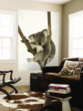 Australia, Queensland, Lone Pine Koala Sanctuary, Koala Wall Mural by Walter Bibikow