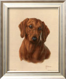 Miniature Dachshund Art by Judy Gibson