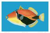 Humuhumu Engraving, Hawaii State Fish Láminas por Steve Strickland