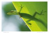 Here's Looking at You Kid, Hawaiian Green Gecko Art by Devon Stevens