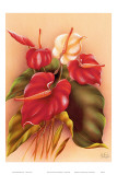 Hawaiian Red and White Anthuriums c.1940s Print by Frank Oda