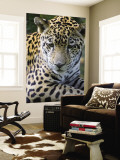 Wildlife in Belize, Jaguar Wall Mural by Jane Sweeney