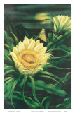 Blooming Cereus with Full Moon, Hawaii Posters by Ted Mundorff