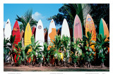 Old Surfboards Never Die, Hawaii Poster di Bernard Fickert