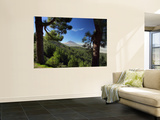 Mt. Teide, Tenerife, Canary Islands, Spain Wall Mural by Alan Copson