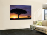 Acacia Tree at Sunrise, Serengeti National Park, Tanzania Wall Mural by Paul Joynson-hicks