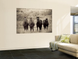 Horses, Montana, USA Wall Mural by Russell Young