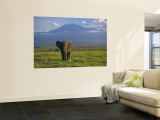 Elephant, Mt. Kilimanjaro, Masai Mara National Park, Kenya Wall Mural by Peter Adams