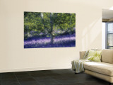 Bluebell and Silver Birch Wall Mural by Jon Arnold