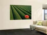 Tea Fields, Fuji, Honshu, Japan Wall Mural by Steve Vidler