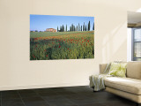 Poppies, Tuscany, Italy Wall Mural by Peter Adams