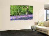Bluebells in Woods, Springtime Reproduction murale géante par Jon Arnold
