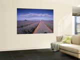Lavender Fields, Provence, France Wall Mural by Jon Arnold