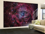 The Rosette Nebula Wall Mural  Large