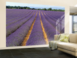 Lavender Fields, Provence, France Wall Mural – Large by Jon Arnold