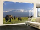 Elephant, Mt. Kilimanjaro, Masai Mara National Park, Kenya Fototapete – groß von Peter Adams