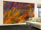 White Mountain National Park, New Hampshire, USA Wall Mural – Large by Alan Copson