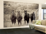 Horses, Montana, USA Wall Mural – Large por Russell Young