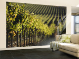 Vineyard, Napa, Napa Valley, California, USA Wall Mural – Large by Walter Bibikow