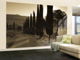 Country Road Towards Pienza, Val D' Orcia, Tuscany, Italy Wall Mural – Large by Doug Pearson