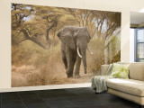 Loxodonta Africana, Lake Manyara National Park, Tanzania Fototapete – groß von Ivan Vdovin