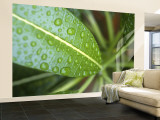 Leaf Detail, Maldives, Indian Ocean Wall Mural – Large by Jon Arnold