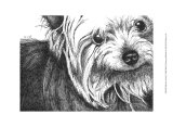 Bella the Yorkie Art by Beth Thomas