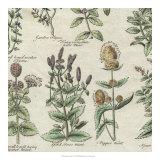 Delicate Garden IV Giclee Print