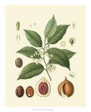 Botanical Glory III Giclee Print