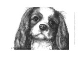 Louie the Cavalier King Charles Posters by Beth Thomas