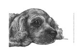 Charlie the Cocker Spaniel Prints by Beth Thomas