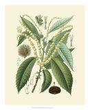 Botanical Glory II Giclee Print
