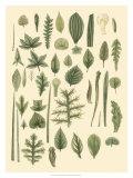 Abundant Foliage I Giclee Print by  John Miller (Johann Sebastien Mueller)
