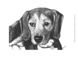 Lindy the Beagle Prints by Beth Thomas