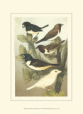 Petite Songbirds IV Prints by  Cassel