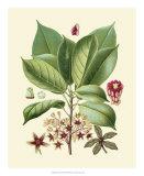 Botanical Glory I Giclee Print
