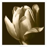 Sepia Tulip II Giclee Print by Renee Stramel