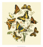 Butterfly Gathering I Giclee Print