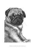 Ralph the Pug Print by Beth Thomas