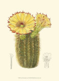 Flowering Cactus I Prints by Samuel Curtis