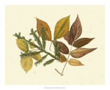 Elm, Spruce, Beech and Ash Giclee Print by  Denton