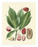 Botanical Glory VI Giclee Print