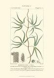 Turpin Botany II Prints by  Turpin