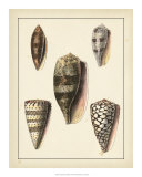 Antique Shells IV Affischer av Denis Diderot