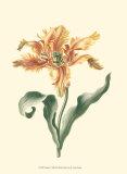 Tulipa I Posters