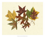 Tulip Tree, Sweet Gum and Scarlet Oak Giclee Print by  Denton