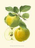 Antique Green Apple Print