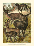 Deer Art by Henry J. Johnson